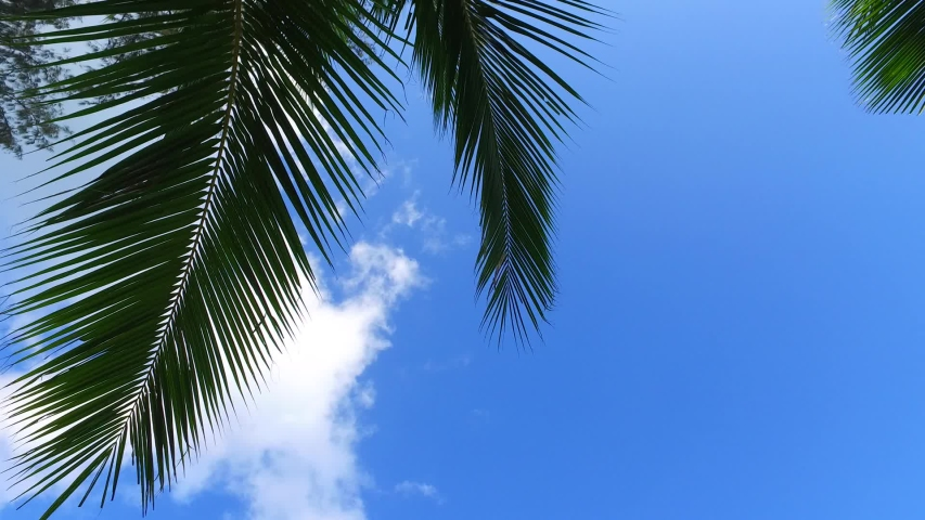 Zoom-in view of coconut tree's leaves showing off a portion of the clouds. | Shutterstock HD Video #1054283594