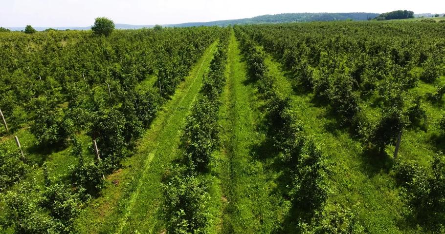 Apple orchard from a bird's eye view | Shutterstock HD Video #1054294658