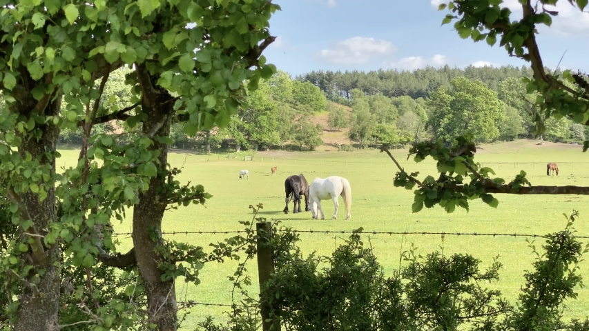 Horses eating in the sun New Forest UK