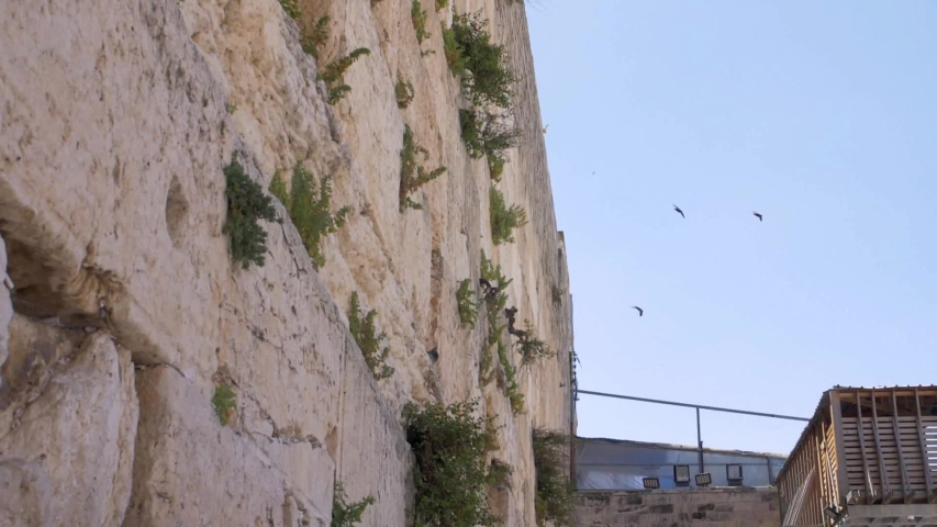 The wailing Wall (kotel,Western) With Swifts Birds Flying. | Shutterstock HD Video #1054297601