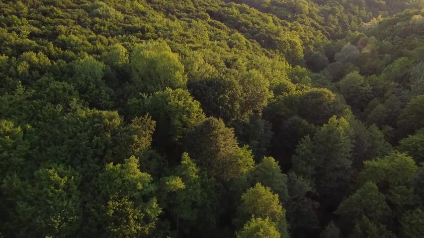 Aerial video above forest in evening light