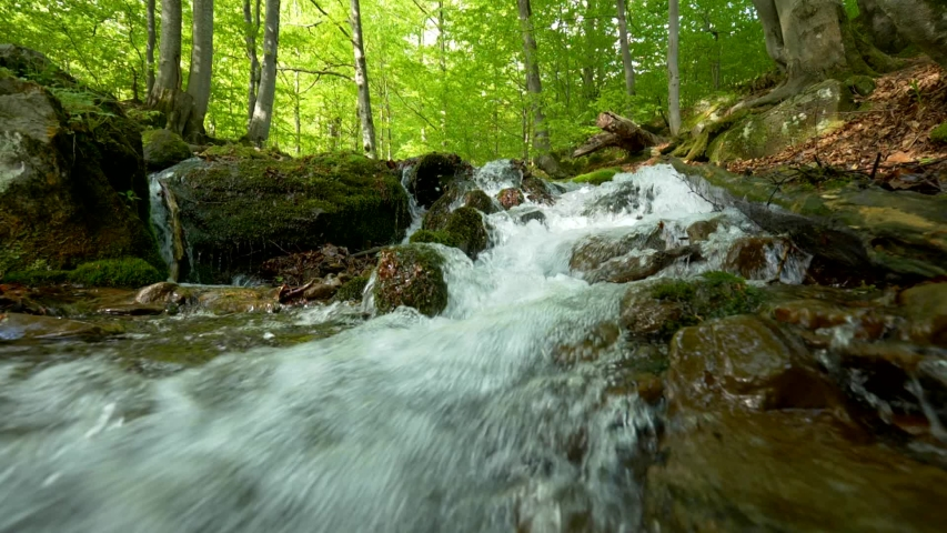 Stream running fast in summer green forest. Small waterfall with crystal clear water. Stones and logs covered with moss. Steadicam slow motion shot