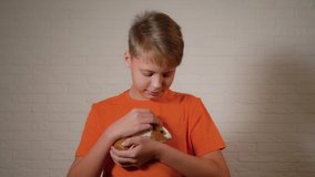 Closeup view video portrait of kid with his lovely home pet small guinea pig. Young boy holding his cute rodent domestic animal in hands.