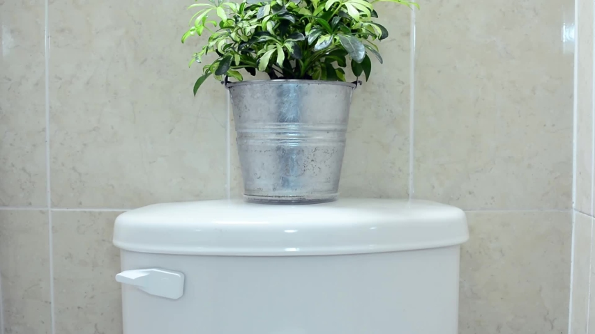 Small plant on water box of a toilet and male hand flushing water | Shutterstock HD Video #1054313753