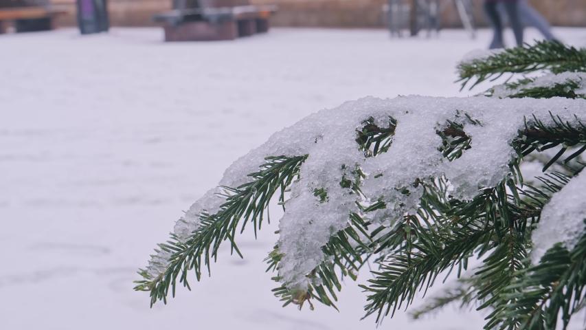 Winter Snow, A coniferous tree in hoarfrost in christmas city | Shutterstock HD Video #1054317320