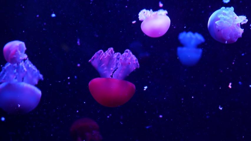 Shiny vibrant fluorescent jellyfish glow underwater, dark neon dynamic pulsating ultraviolet blurred seamless looped backdrop. Fantasy hypnotic mystic pcychedelic dance. Phosphorescent cosmic medusa. | Shutterstock HD Video #1054348469