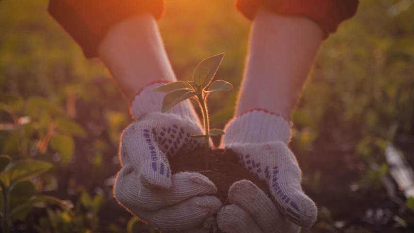 Farmer hand holding leaf of cultivated plant. Hands holding pile of arable soil. Agriculture, gardening or ecology concept.