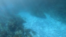 Underwater video footage of a huge flock of marine fish among colored corals