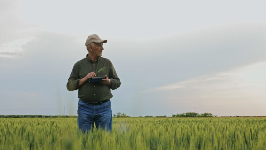 Senior farmer standing in wheat field holding tablet in his hands and examining crop. | Shutterstock HD Video #1054369562