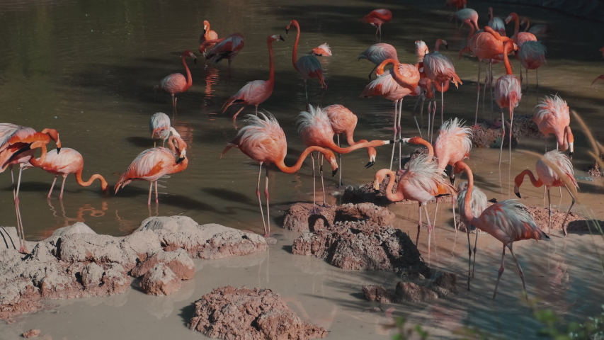 Flock of flamingoes in small lake, birdwatching in zoo park