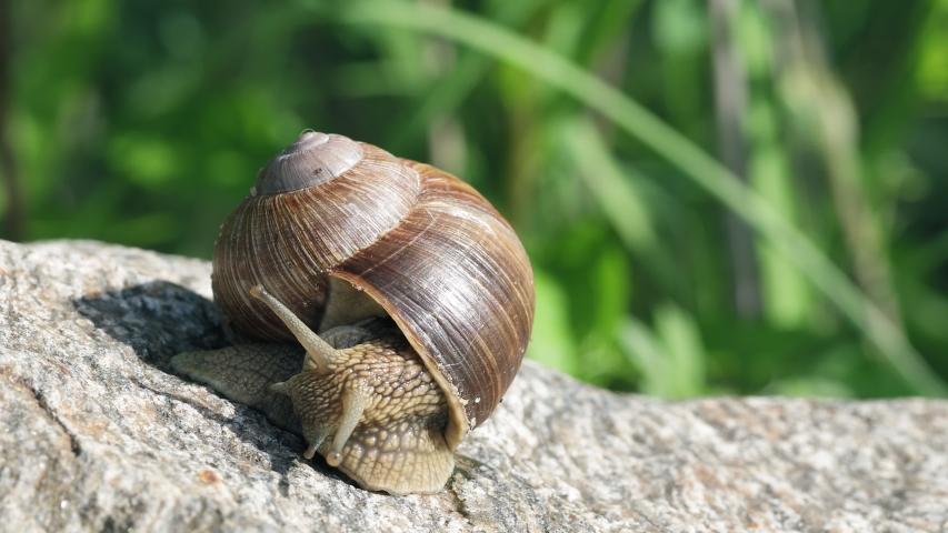 Snail macro view. Snail view. Snails on stone. | Shutterstock HD Video #1054382705