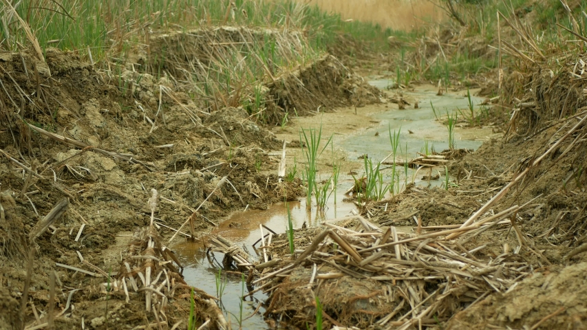 Drought river stream wetland, swamp creek rivulet drying up soil water cracked crust earth climate change, surface extreme heat wave caused crisis, environmental disaster clay cracks, death plants | Shutterstock HD Video #1054382999
