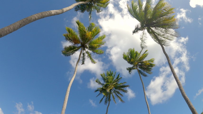 BOTTOM UP: Idyllic view of fluttering palm trees stretching out into the picturesque clear blue sky. Driving along a scenic palm tree avenue in the rural part of a remote island in the Caribbean sea. | Shutterstock HD Video #1054384616