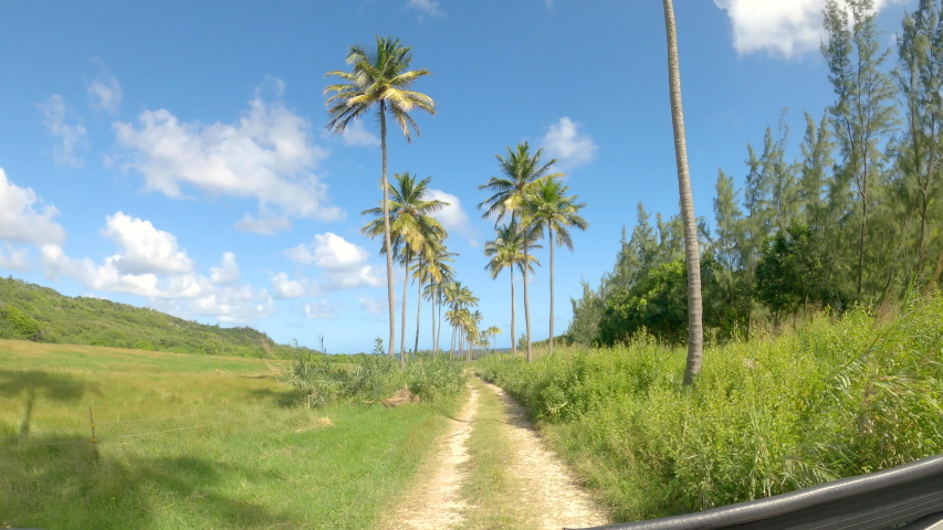 POV: Scenic car ride along a palm tree avenue in the vibrant green countryside of Barbados. Palm trees tower high above a scenic rural trail running across a remote island in the sunny Caribbean. | Shutterstock HD Video #1054384619