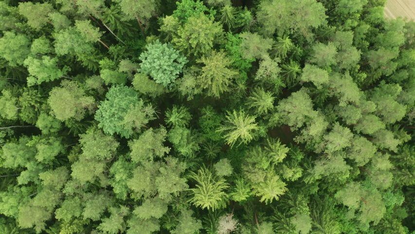 Top down view mixed forest, woodland aerial. Drone flies over treetops conifers, cloudy day in natural park. Green moss, grass and plants. Zoom out and spin above colorful texture in nature | Shutterstock HD Video #1054388846