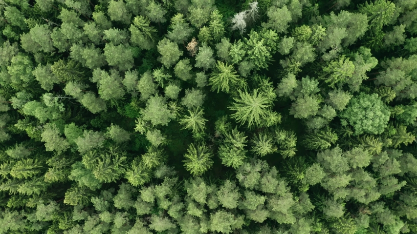 Top down view mixed forest, woodland aerial. Drone flies over treetops conifers, cloudy day in natural park. Green moss, grass and plants. Zoom out and spin above colorful texture in nature | Shutterstock HD Video #1054450610
