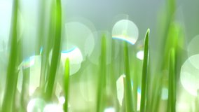 Fresh green grass with dew drops clips, rain drops on green grass video