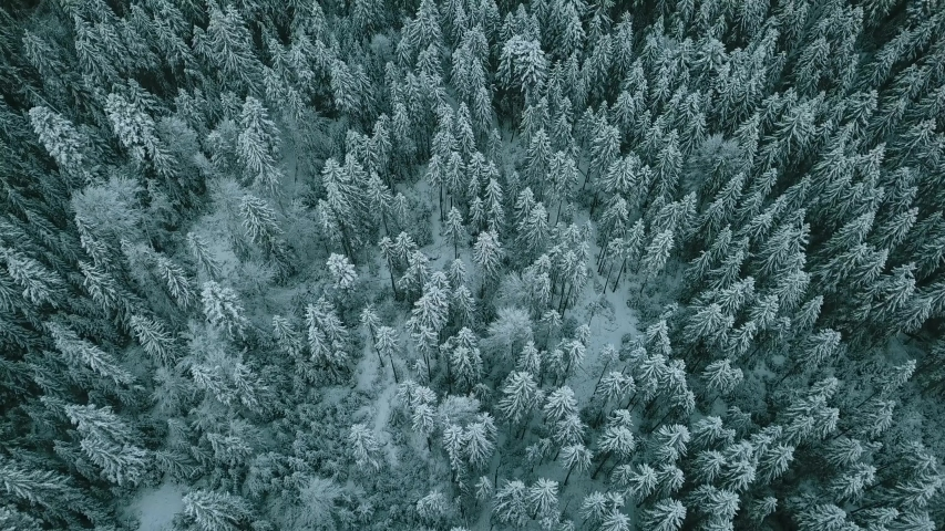 Aerial view of a frozen forest with snow covered trees at winter. Flight above winter forest in Finland, top view.