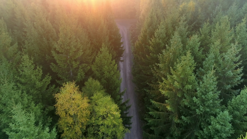 Aerial top down view of gravel road in forest in the autumn at sunrise. Drone shot flying over tree tops, Nature background in 4K resolution Royalty-Free Stock Footage #1054485050