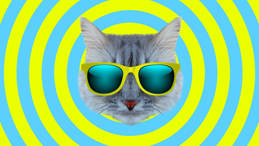 Cat style wiggle moving color background. Abstract graphics in trendy colors and style. Seamless looped motion graphic animation. | Shutterstock HD Video #1054523657