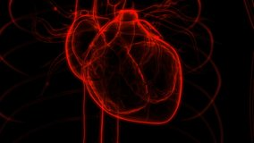 Human Circulatory System Heart Beat Anatomy Animation Concept. 3D