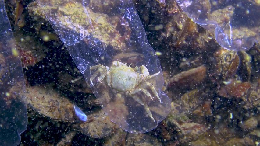 Plastic trash in the sea, animal killer in the water. Death trap for crab plastic glove. Black Sea | Shutterstock HD Video #1054562261