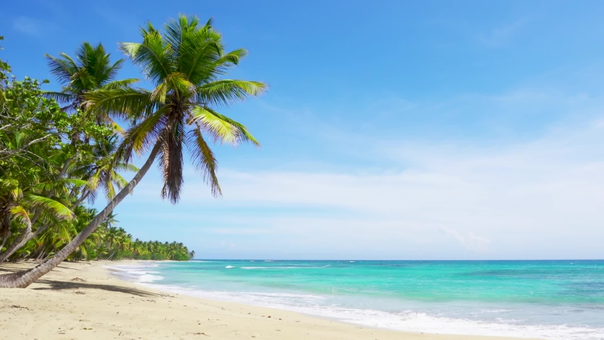 Palm trees and sea, sunny summer day in the Atlantic ocean. Punta Cana Dominican republic Caribbean Sea and sky and beach landscape. Big white waves lie on a wild white sand beach.