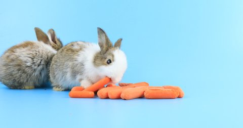 Rabbit Eating Carrot Stock Video Footage - 4K and HD Video Clips |  Shutterstock