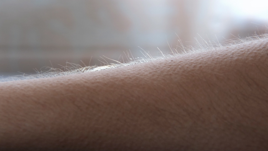 Close-up of the hair on the man's arm rising. A reaction to pleasure, fear, or cold. Goosebumps appear on the skin. | Shutterstock HD Video #1054675769