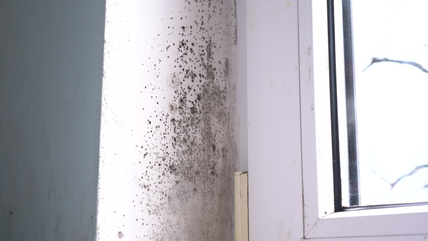 Growth of black mold on the walls inside an apartment building. Moisture indoors and the appearance of mold Royalty-Free Stock Footage #1054676675