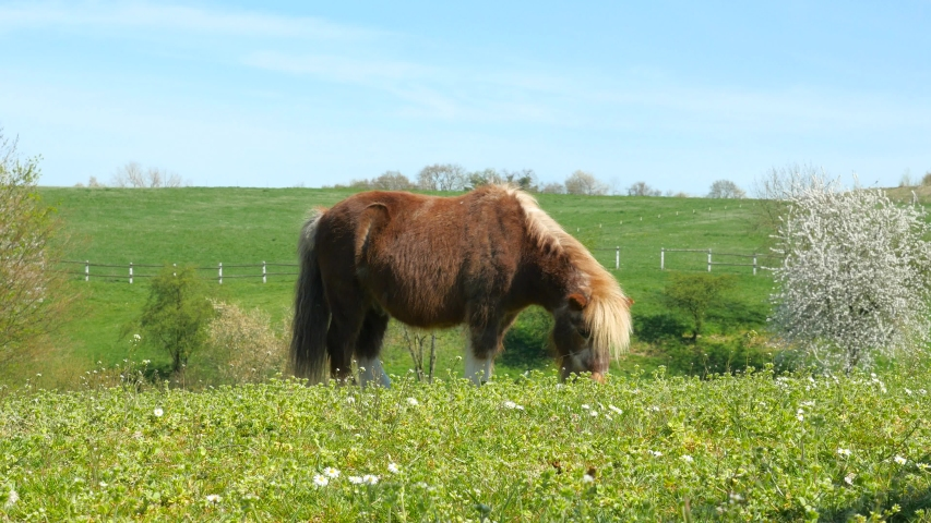 Pony grazes on a pasture in a beautiful landscape in springtime | Shutterstock HD Video #1054681103