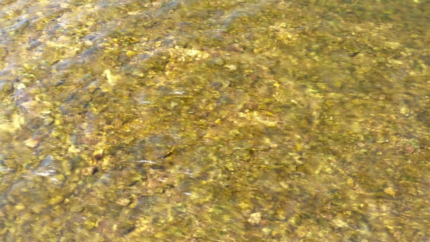 Crystal clear river. Pebbles on the bottom of a stream.   Shutterstock HD Video #1054684073