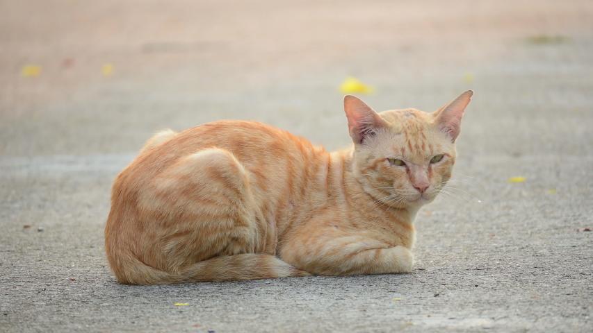 Orange tabby kitty cat adorable domestic pet | Shutterstock HD Video #1054685714