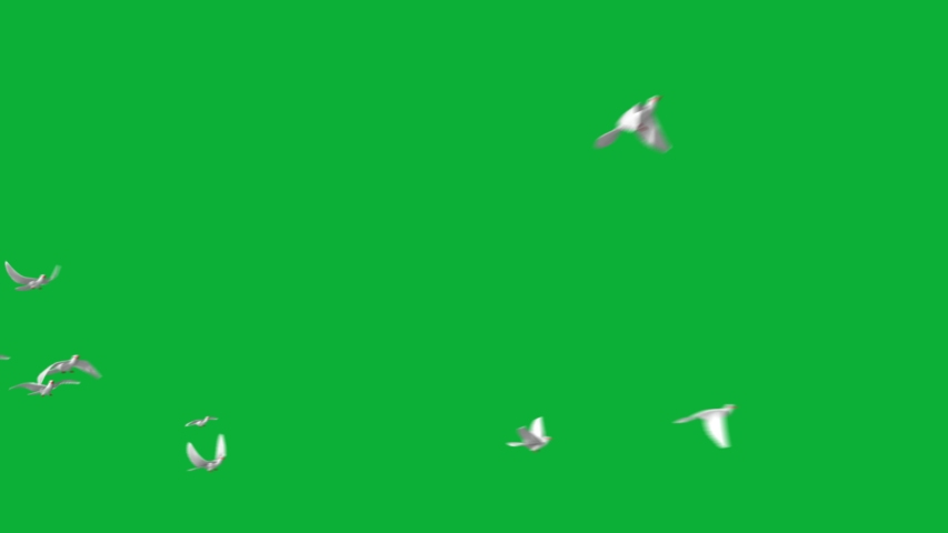 DOVES Flying Pack 4K animation on Green screen Background - Realistic Flock of birds flying - Multiple animations - Pigeons Flying  | Shutterstock HD Video #1054687925
