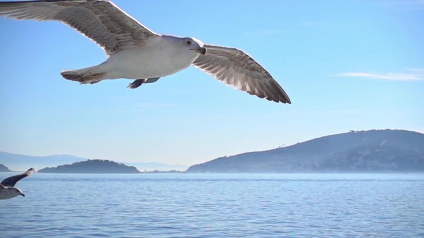Seagull is flying in beautiful blue sky, Slow Motion. | Shutterstock HD Video #1054694708