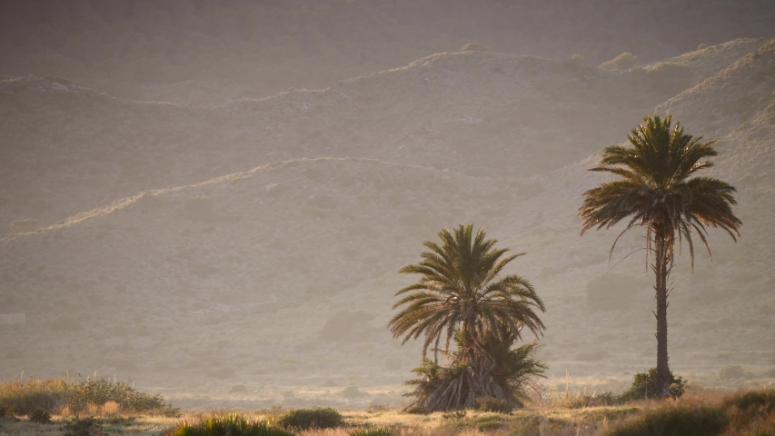 Palm trees against mountains background. Spanish nature landscape, Calblanque Natural Park in Murcia.