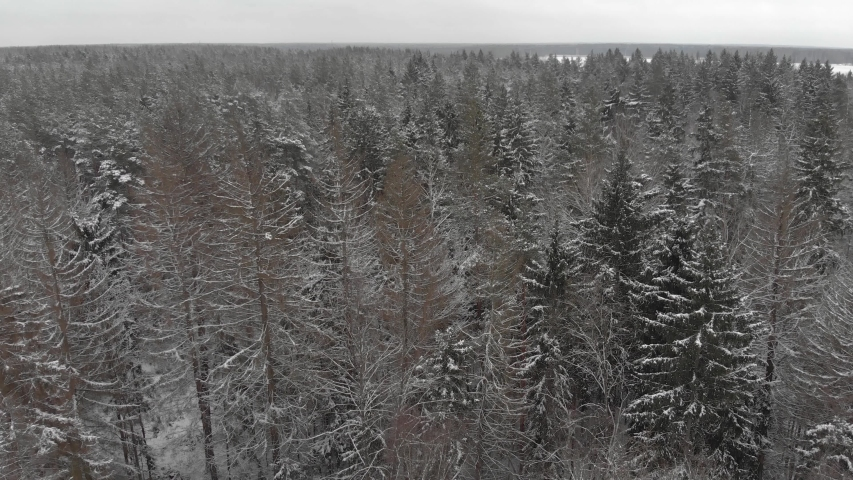 4K aerial footage top view of bare tree branches in a winter forest. Magical coniferous and deciduous plants in cloudy weather | Shutterstock HD Video #1054703390