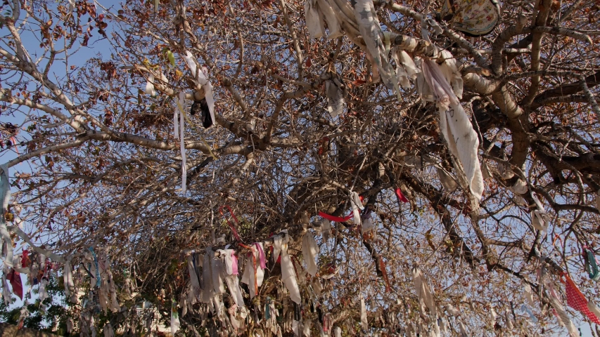 Colorful ribbons tied on a wish tree in Cyprus. Shot of a wishing tree with countless messages, wishes and hopes written down on different materials. | Shutterstock HD Video #1054704437