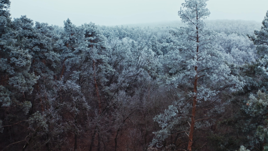 Forest in winter. Breathtaking view of snowy landscape. Tops of trees covered with hoar frost. Flight above white trees. Aerial view. | Shutterstock HD Video #1054706813