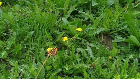 Bee and butterfly on a flower green grass