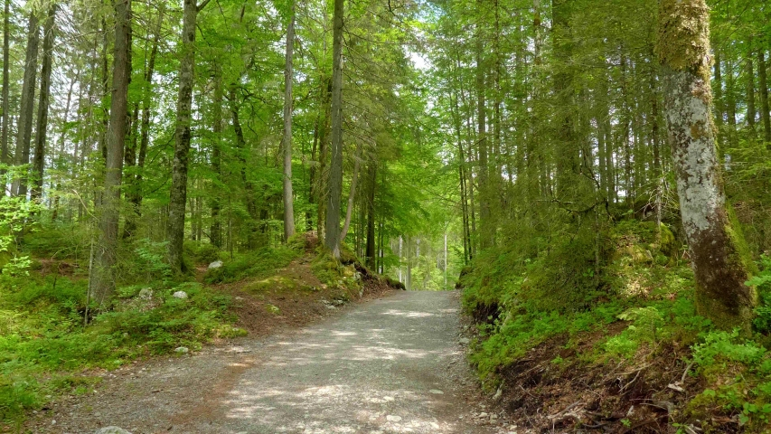 Hiking path through a forest on a sunny day - pure nature