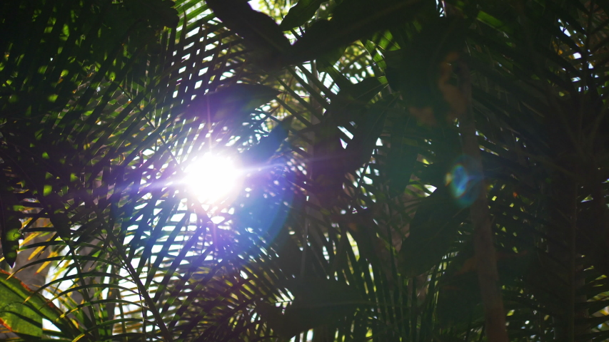 Lens flare behind tropical plants in 4k slow motion 60fps | Shutterstock HD Video #1054719395