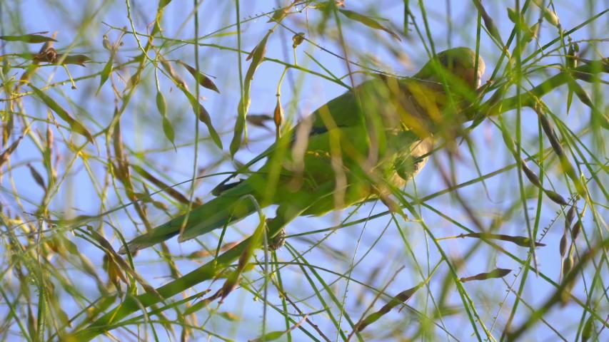 Green parrot on the tree tree in 4k slow motion 60fps | Shutterstock HD Video #1054719407