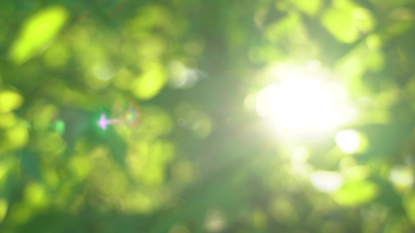 Beautiful green vibrant natural video bokeh abstract background. Defocused leaves of old trees and soft sunset sunlight transparenting through branches. | Shutterstock HD Video #1054726244