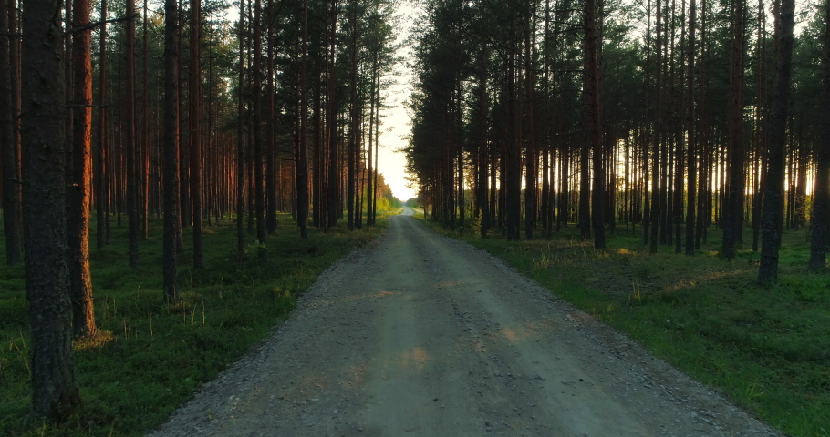Gravel road in green pine forest at sunset on countryside | Shutterstock HD Video #1054726661