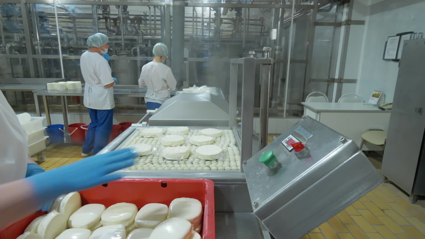 Dairy food production line. Female factory workers at the industrial line packing cheese into plastic pack