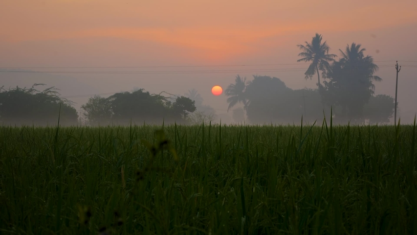 Sunrise at Village Paddy Field, Mide Shot