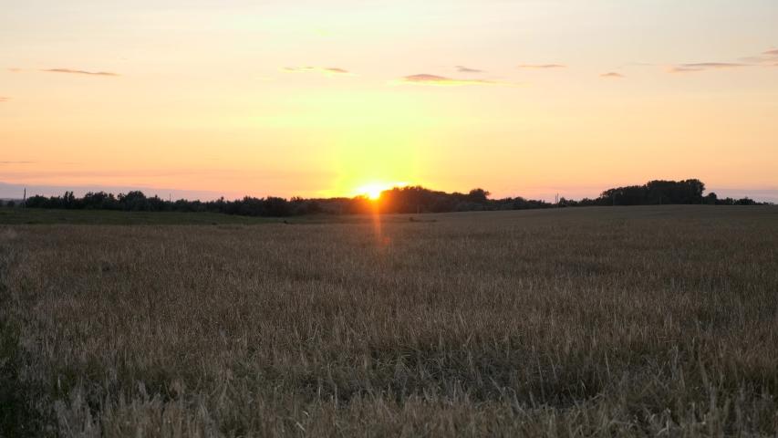 Sunset over Barley Crop Field. Evening Rural Scene | Shutterstock HD Video #1054728320