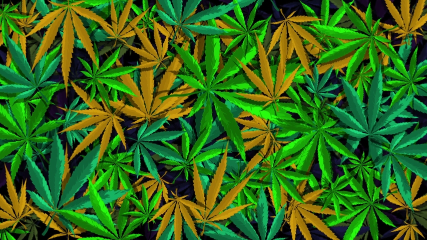 Lovely colorful the background is drawn from vector and rasterized cannabis leaf. Chaotic is spinning and moving - they create a surreal mesmerizing animation, from which it is impossible to look away