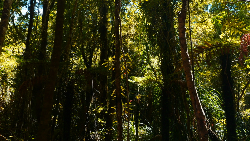 Amazing colors from the awesome Waitaha forest in New Zealand.